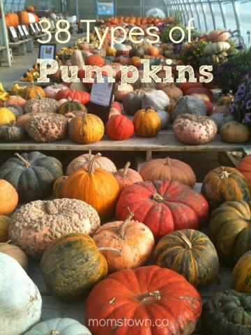 types of pumpkin