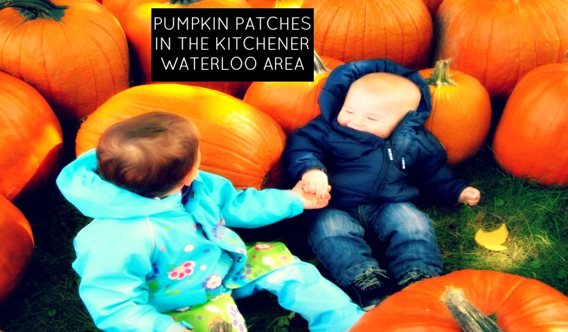 PUMPKIN PATCHES IN THE KITCHENER WATERLOO AREA